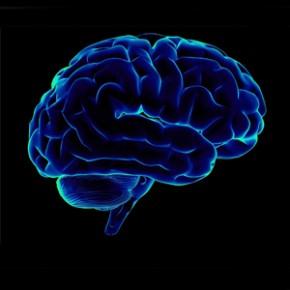 Учеными обнаружен участок мозга, отвечающий за совесть